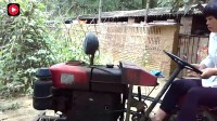 农村妇女开拖拉机,摇杆点火、倒车、开走一气呵成,动作流畅