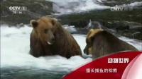 动物世界之蛇《动物世界》擅长捕鱼的棕熊1jp0动物世界鳄鱼