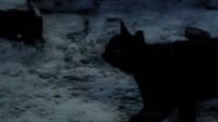 《自然志》神秘的猫脸老太的传说!
