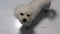 我的小狗狗