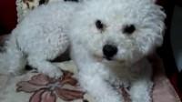 我的小狗狗3