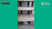 听说,每个汪星人对楼梯都有不一样的理解,看了绝对涨姿势!
