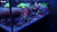 養了兩年的海水缸視頻欣賞