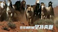 励志上海企业宣传片 中视明德文化传媒