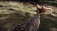 巨蟒大战鳄鱼,太血腥了