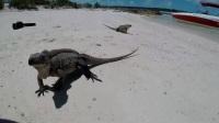 巴哈马旅游,不一样的海岛风情:粉色沙滩,猪岛,加勒比海…