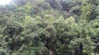 峨眉山中的瀑布02