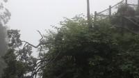峨眉山雷洞坪:雨中观猴06
