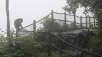 峨眉山雷洞坪:雨中观猴05