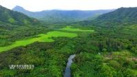 夏威夷旅游 航拍欧胡岛山谷河流热带雨林 DJI Phantom 4 大疆无人机 Oahu Hawaii ハワイ旅行