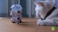 当最萌机器人惹上大花喵, 谁会被掀翻在地!