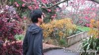 新西兰的本土鸟Tui, 樱花盛开的植物园