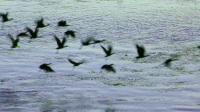 悠游埃及 乘游轮看尼罗河两岸 只有美丽没有惨案