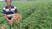 开磷化肥辽宁省葫芦岛分销中心绥中县肥效体验