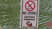 恶作剧: 潜水员私自下水, 结果被食人鱼吃成一堆白骨