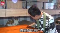 张信哲救助流浪动物花费超过百万台币