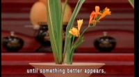 Don't be attached to anything, even to the Dharma (GDD-772) DVD