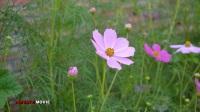 风景欣赏(16-68)BASHANG GRASSLAND