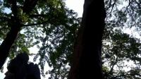 3 苏州园林系列-怡园 20170916