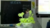 初中综合实践 校园植物调查 课例(一)