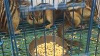 出售各种小宠物  仓鼠🐹金丝熊🐻 魔王松鼠 金花松鼠 黄山松 蜜袋鼬  土拨鼠         喜欢需要亲们联系 微信号 手机号同步 17820481300