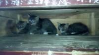 逗猫小组 5
