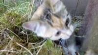 d557可爱小猫咪 小猫玩耍 咬东西 草地 宠物 动物 视频素材