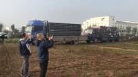 山东舜航公棚100公里(收费站)在山东菏泽中药产业园开笼视频