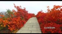 3A影视——满山红叶 层林尽染长寿山