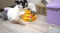 猫咪转转球大作战