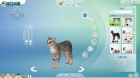 模拟人生4猫狗总动员(1)露西的波斯猫波奇