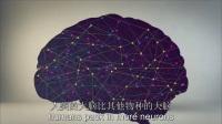 Richard E. Cytowic:你大脑的使用率有多少?