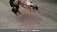 为什么被狗追时, 只要你一弯腰狗就跑了? 答案你万万想不到!