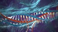 HPCConnects - CRISPR