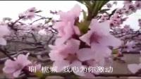 歌曲 又见桃花开(深州桃乡)—郑艳伟