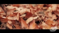 白领天使HD-蒂芬妮·沃德-官方-Wolves - Selena Gomez (Tiffany Alvord Cover)