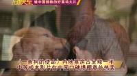 【理财放映室】《一条狗的使命》内地票房占全球一半 中等成本影片在中国口碑爆棚意外热卖