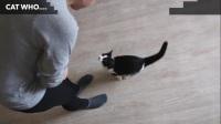 [猫]天才奶牛喵的超强技能集锦~[CatPusic]-o(*≧▽≦)ツ