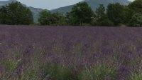 【南法】法国南部漫山遍野的薰衣草田