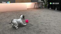 CES 2018: 索尼的 Aibo 机械狗又回来了, 将来或许还能充智能管家