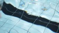 《力健杯》游泳联谊赛暨丰泽区游泳协会2018新春联谊会
