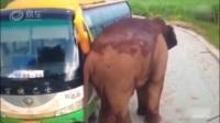 中巴车半路出故障,遇到一头调皮野象!