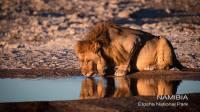 NAMIBIA Etosha National Park狮子
