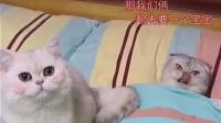 ^_^弱智猫yaobaobao