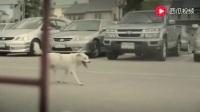 泰国创意暖心广告《狗的报恩》没看过的绝对猜不出什么类型广告