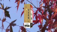 贵州酱香企业品牌推广平台 (3)