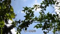 淨修法要(有字幕)2017.12.31台灣台南極樂寺(節錄自32-258台南極樂寺餐後開示)-0002
