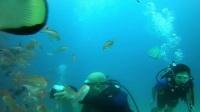 2018菲律宾海豚湾潜水