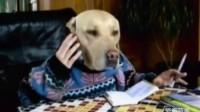 瞧个狗模人样的,翻开电话本打起手机,还和大家打招呼,哈哈哈!