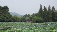 【艾菲鱼 迷你Vlog 】初访杭州不可错过的西湖美景 039